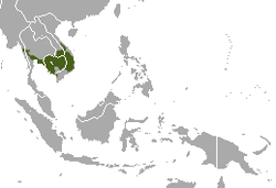 Distribución del langur de Indochina