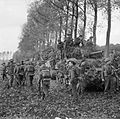 Infantry of 51st Highland Division and Sherman tanks near Udenhout, Holland, 29 October 1944. B11455.jpg