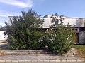 Inotai készenléti lakótelep - Elhagyott élémiszerbolt - panoramio (2).jpg