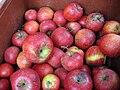 Jablka (9).jpg