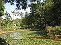 Jardim Botânico de São Paulo - general view IMG 0133.jpg