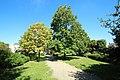 Jardin de l'Europe à Verrières-le-Buisson le 20 août 2017 - 3.jpg