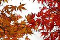 Jardin japonais Toulouse (8602188093).jpg