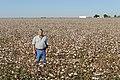 Joe Reed standing in his defoliated cotton crop, Kress, TX. (24821501330).jpg
