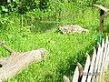Jurapark Baltow, Poland (www.juraparkbaltow.pl) - (Bałtów, Polska) - panoramio (60).jpg