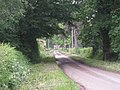 Just another tree-lined lane - geograph.org.uk - 832663.jpg