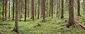 Jyväskylä - forest in Ristikivi.jpg
