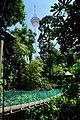 KL Forest Eco-Park Canopy Walk 1.jpg