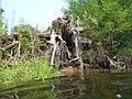 Kanivs'kyi district, Cherkas'ka oblast, Ukraine - panoramio - юра запеченко (36).jpg