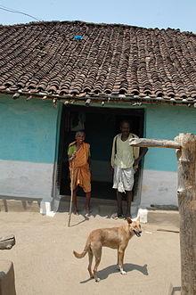 Indian Pariah Dog Adoption