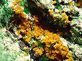 Kasolite-Malachite-Metatorbernite-jr-17b.jpg