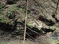 Kavinský potok (2).jpg