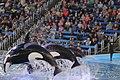 Killer whales San Antonio Sea World IMG 1617 (2).JPG