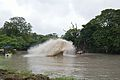 Kings Lake Dredging - Banyan Avenue - Indian Botanic Garden - Howrah 2013-10-27 3851.JPG