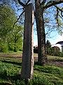 Klütz Turnerdenkmal.jpg