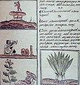 Kodeks florntico 22.jpg