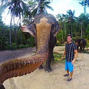 Animal-made art - Image: Koh Phangan elephant selfie