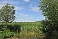 Koolkerke Landscape R03.jpg