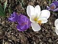 Květ 9914.jpg