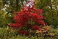 L'arbuste aux feuilles rouges (22886688451).jpg