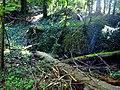 LE BOIS DE LA CAILLE LYON 69004 - panoramio (1).jpg