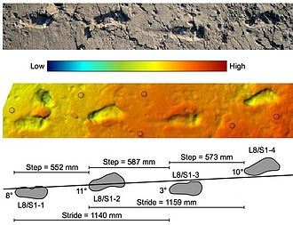 Laetoli - Footprints from Laetoli reported in 2016