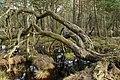 Landschaftsschutzgebiet Oldhorster Moor (LSG-H46) (03).JPG