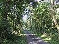 Lane near Martledge - geograph.org.uk - 523977.jpg