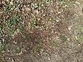 Laubfalter, 03.04.14 - panoramio (1).jpg