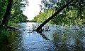 Le bord de Loire en été.jpg