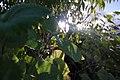Leaves' Sun Bath.jpg