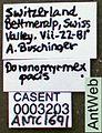 Leptothorax pacis casent0003203 label 1.jpg
