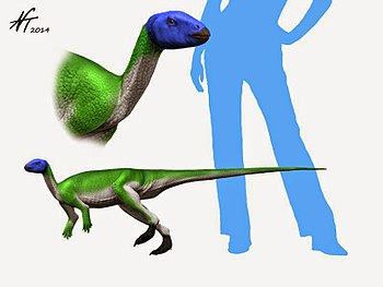 Lesothosaurus NT.jpg