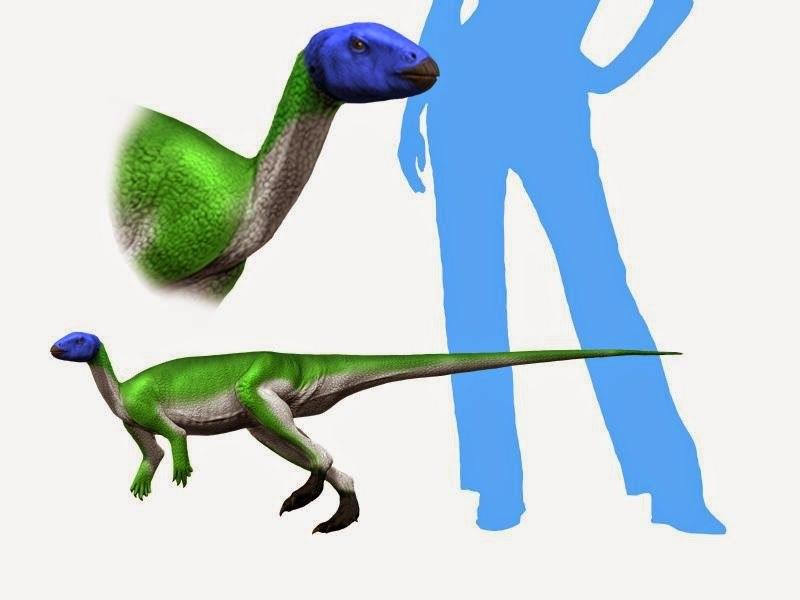 Lesothosaurus NT