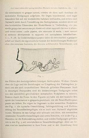 file:libro en honor de d.s. ramón y cjal (page 117) bhl22761162