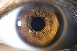 Light brown iris close up.jpg