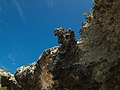 Limestone of Yucatan (4256788359).jpg