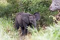 Little Elephant (2392601533).jpg