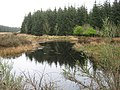 Lochan near Moneypool Burn - geograph.org.uk - 1362635.jpg