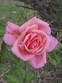 Lorraine Lee St Kilda 22-11-2013 0264.jpg