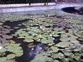 Lotuslake-sarasbag.jpg