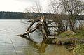 Lusowskie Lake, Lusowko (4).JPG