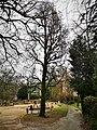 Luxembourg, chêne Krombach, parc Louvigny (101).jpg