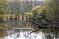 Münster, Boniburger Wald -- 2019 -- 4246.jpg