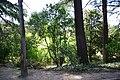 MADRID A.V.U. JARDIN DEL CAMPO DEL MORO - panoramio - Concepcion AMAT ORTA… (10).jpg