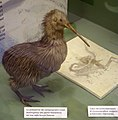 MI civico museo scienze naturali (9) compsognatidi.jpg