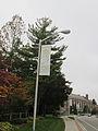 MSU 2014 Botanical Garden Lampost Banner.jpg
