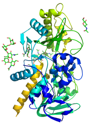 Mandelonitrile lyase - Model of mandelonitrile lyase based on PDB entry 1JU2