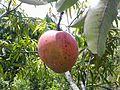 Mangue d'Andampy.jpg