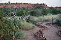Mapungubwe, Limpopo, South Africa (20357143339).jpg
